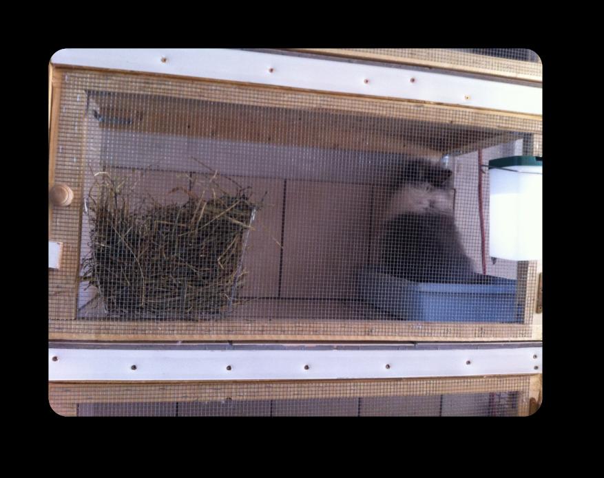 clapier fait maison pour lapin elevage