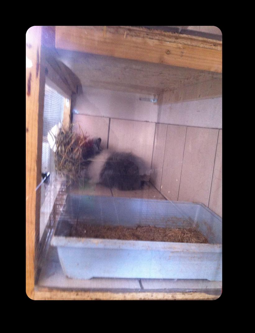 installations élevage de lapin