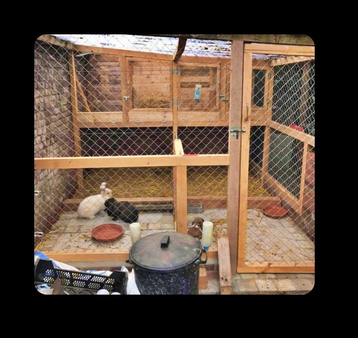 enclos extérieur pour lapin domestique