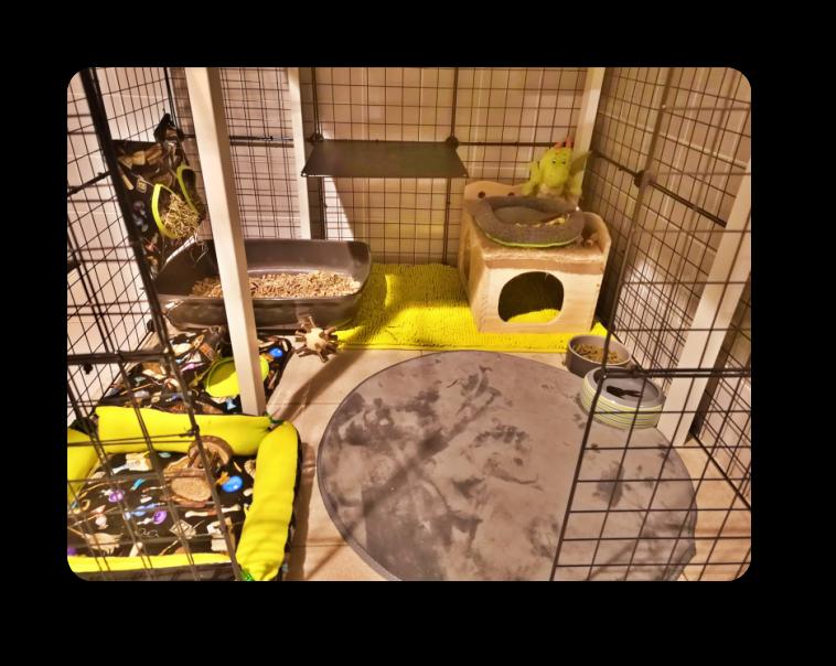 idée d`aménagement d`enclos pour lapin nain