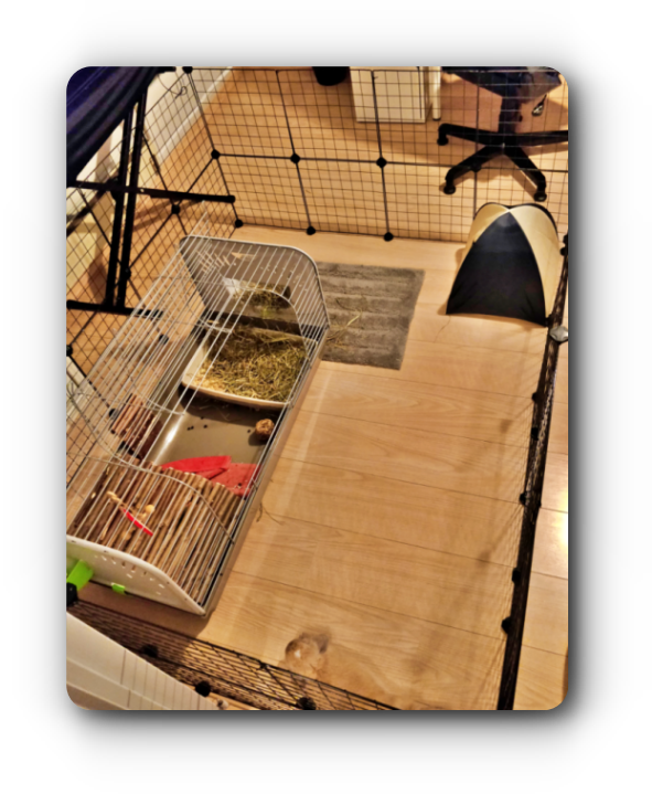 idée aménagement pour lapin