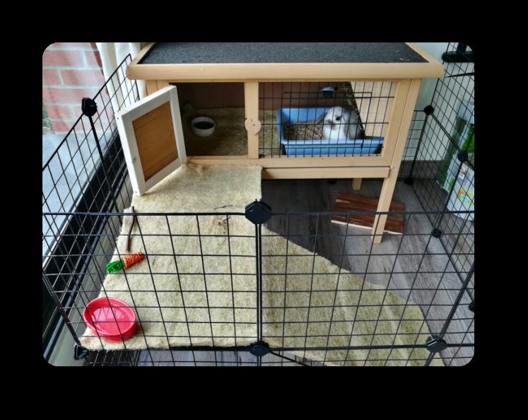 idée d`installation pour lapin domestique