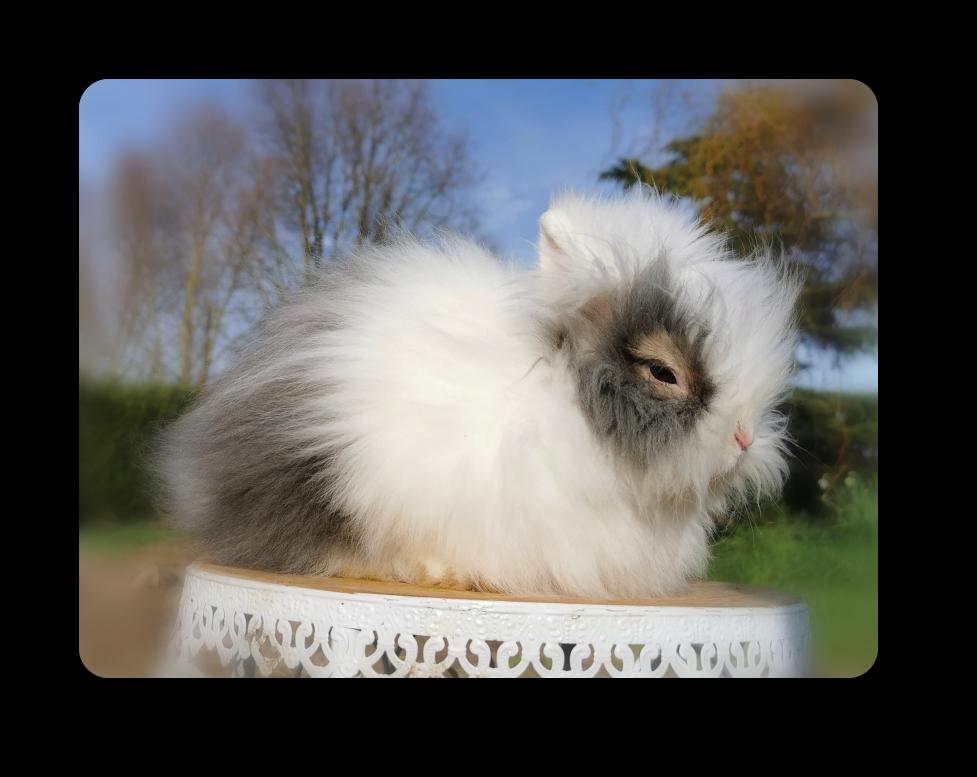 élevage de lapins nains à lille